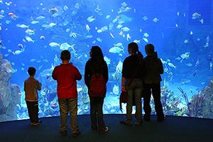 summer อังกฤษ 2018 เรียน ภาษาอังกฤษ ช่วง SUMMER เรียนภาษาอังกฤษ ช่วงซัมเมอร์ เรียนภาษาที่อังกฤษ เรียนภาษาอังกฤษ ช่วงเมษา 2018 plymouth_aquarium
